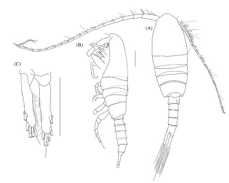 Cmarz New Species Gallery